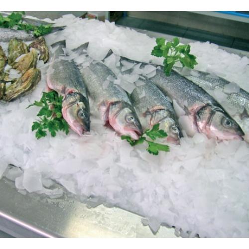 Hibernatus: Le poisson congelé revient à la vie