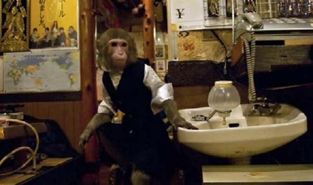 Un singe vous propose un Service Unique